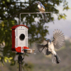 Bird Photo Booth Backyard Bird feeders
